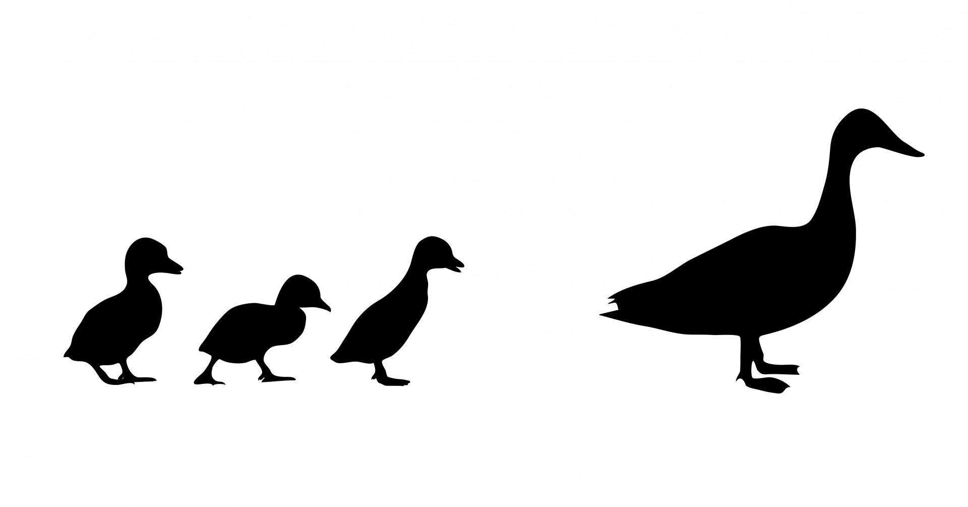 family-ducks